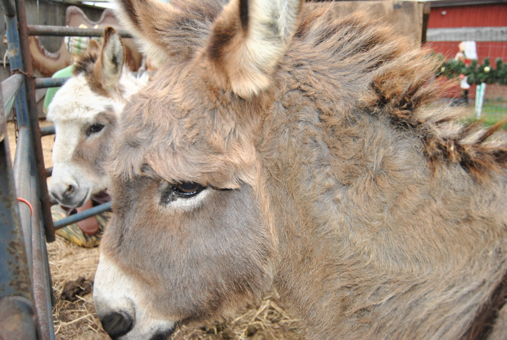 These donkeys were barely moving, but kept an eye on me.